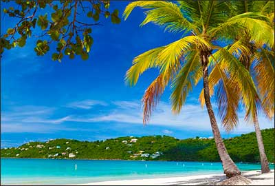 US Virgin Islands Beach Scene with Palm Tree