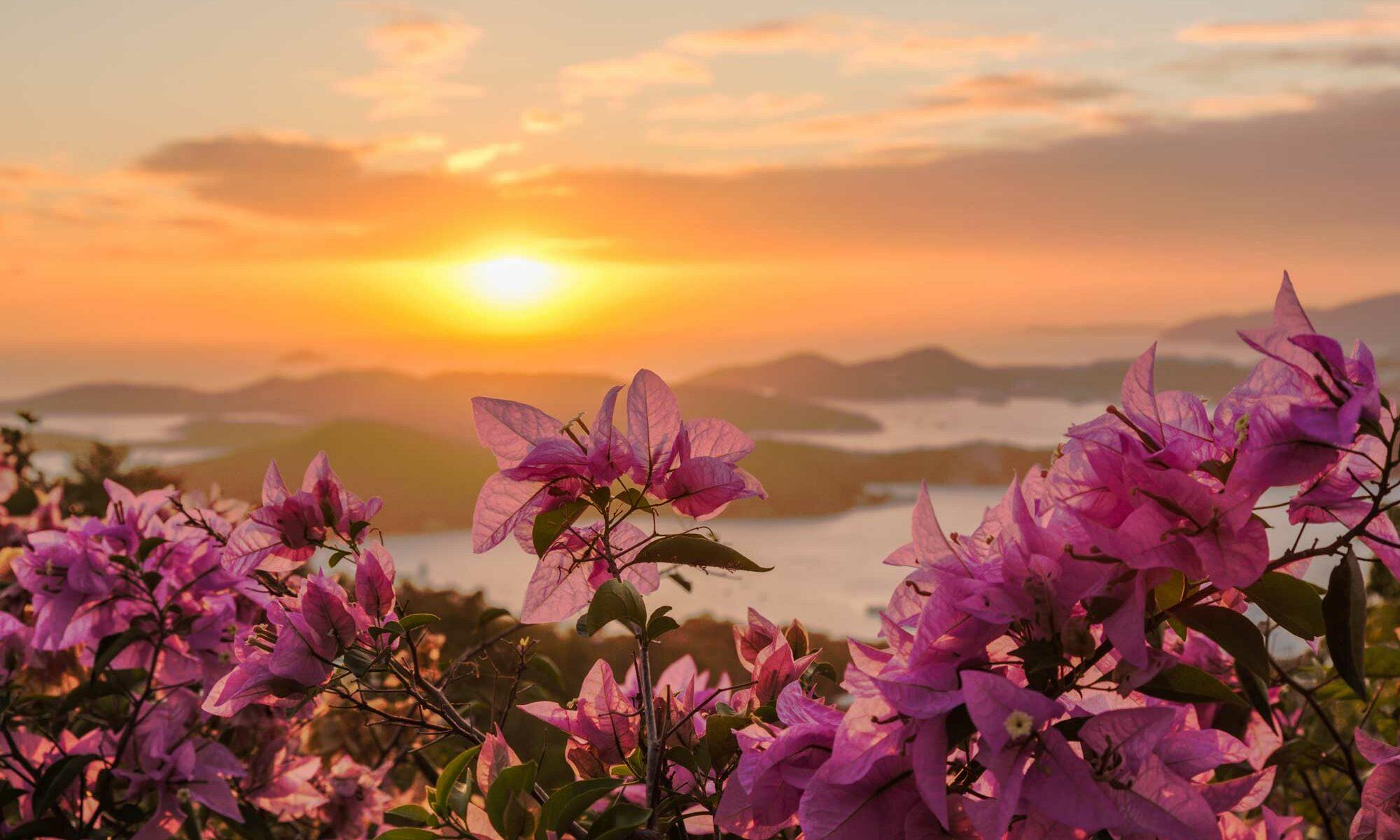 Flowers at Sunset on the USVI